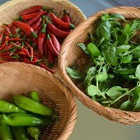 ベランダ菜園収穫