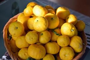 種なし柚子